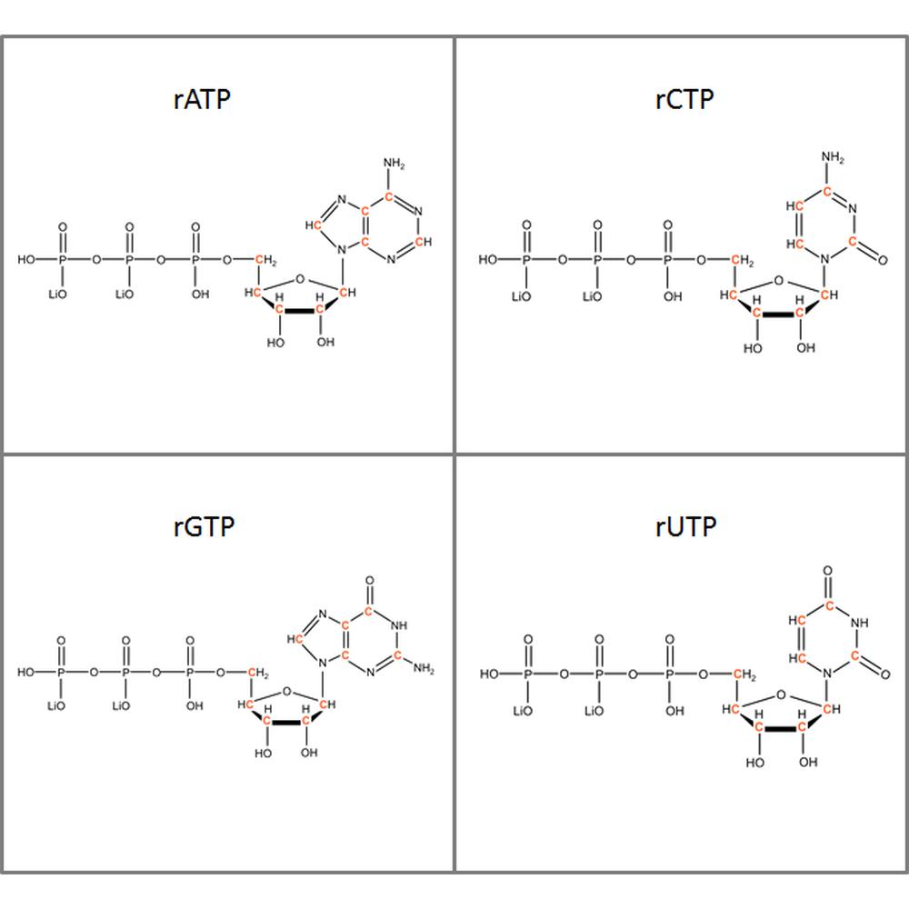 Set of 13C-labeled rNTPs,  4x10mg