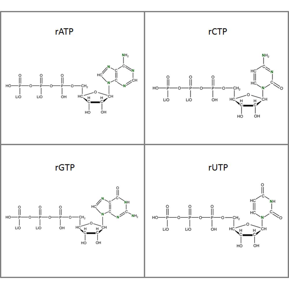 Set of 15N-labeled rNTPs,  4x10mg