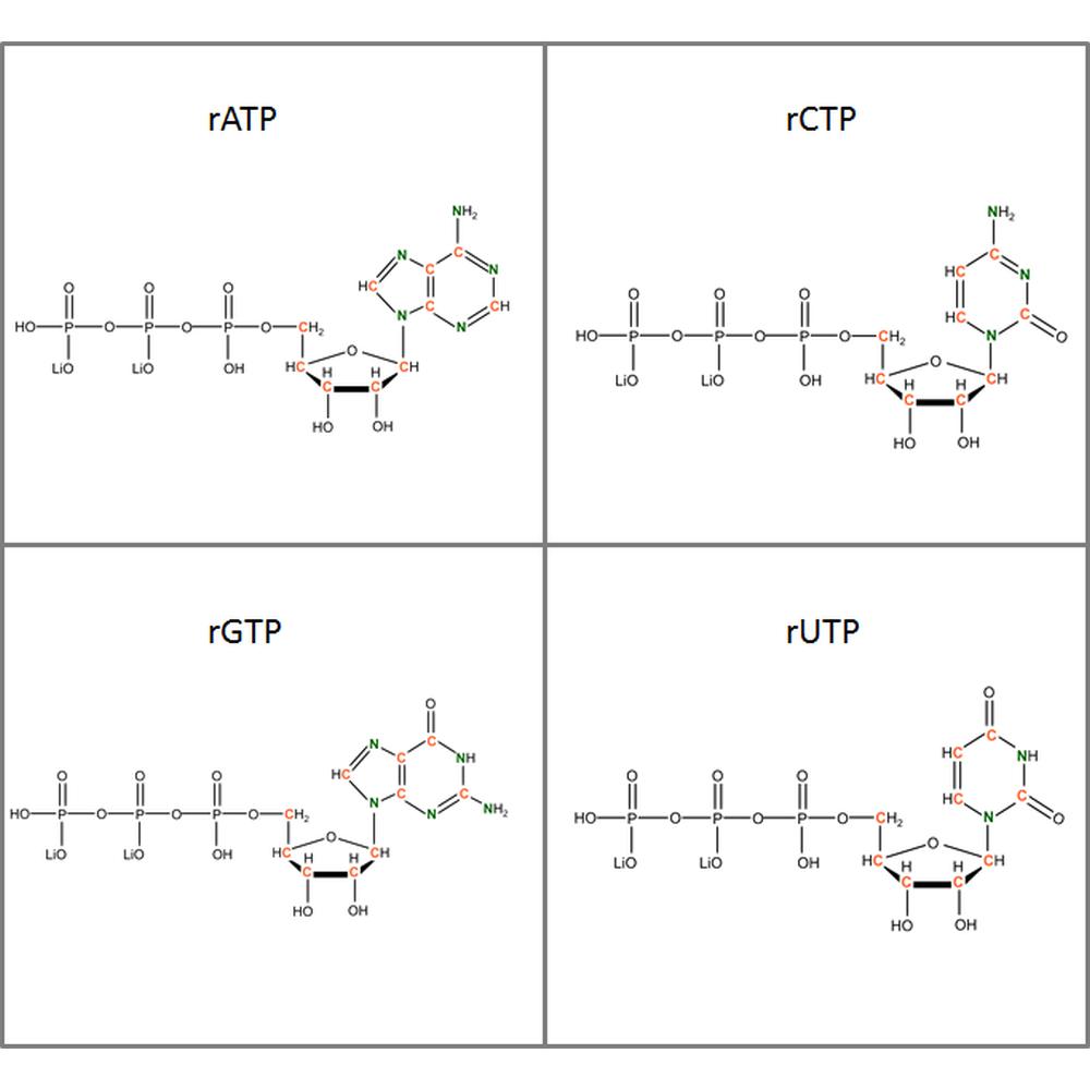 Set of 13C15N-labeled  rNTPs, 4x10mg