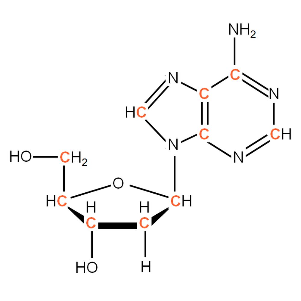 13C-labelled dA
