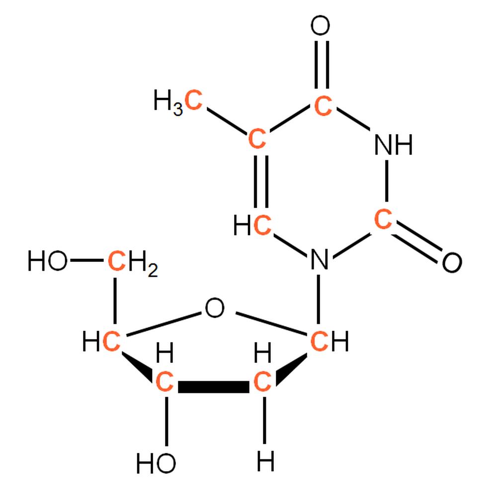 13C-labelled dT