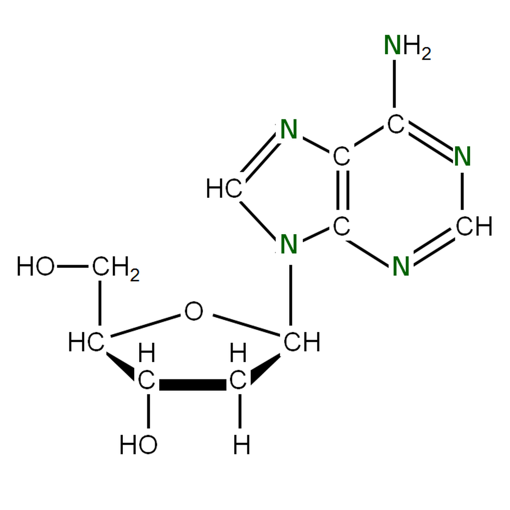15N-labelled dA