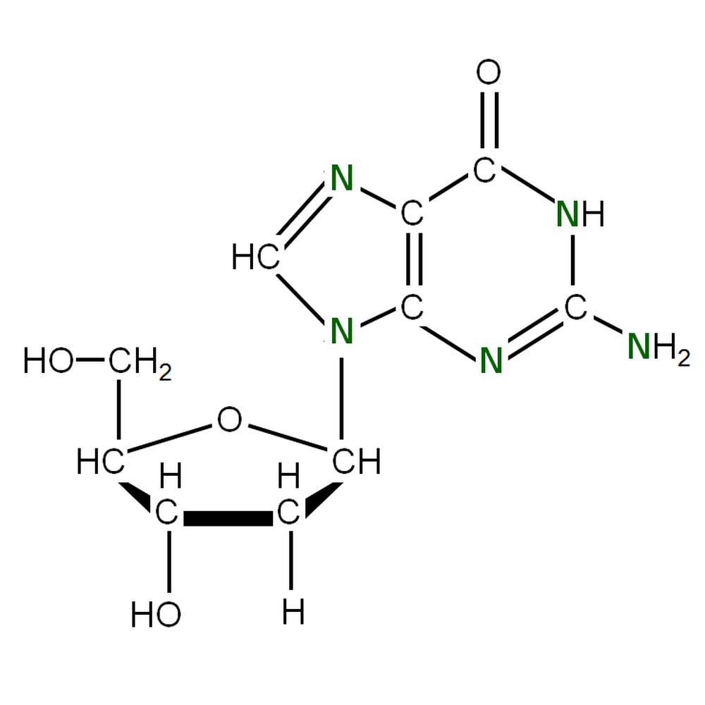 15N-labelled dG