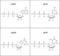 Set of 4 2H-labelled dNTPs  lithium salt powder