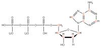13C Deoxyadenosine 5'- triphosphate lithium salt  solution