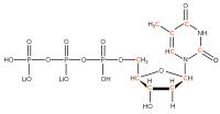 13C Thymidine 5'- triphosphate lithium salt  solution