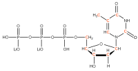 13C Thymidine 5'- triphosphate