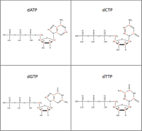 Set of 4 13C-labelled dNTPs  lithium salt powder