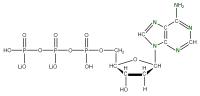 15N Deoxyadenosine 5'- triphosphate lithium salt  solution