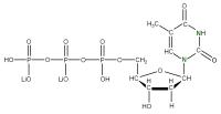 15N Thymidine 5'- triphosphate lithium salt  solution