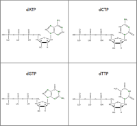 Set of 4 15N-labelled dNTPs  lithium salt powder