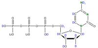 2H15N-labelled dCTP