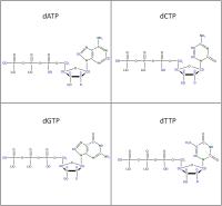 Set of 4 2H 15N-labelled  dNTPs lithium salt powder