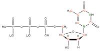 13C 15N Thymidine 5'- triphosphate lithium salt  solution