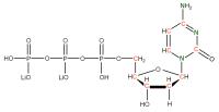 13C 15N Deoxycytidine 5'- triphosphate lithium salt  solution