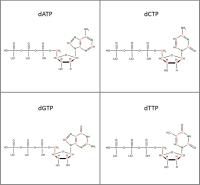 Set of 4 13C 15N-labelled  dNTPs lithium salt powder