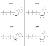Set of 4 13C 15N-labelled  dNTPs lithium salt solution