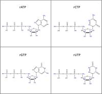 Set of 4 2H-labelled rNTPs  lithium salt solution