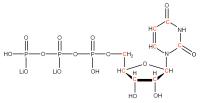 13C Uridine 5'-triphosphate  lithium salt solution