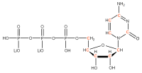 13C Cytidine 5'-triphosphate  lithium salt solution