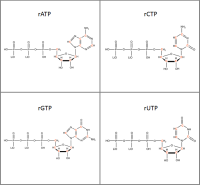Set of 4 13C-labelled rNTPs  lithium salt solution