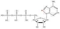 13C8 Adenosine 5'- triphosphate lithium salt  solution