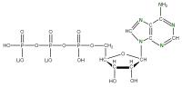 15N Adenosine 5'- triphosphate lithium salt  solution