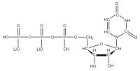 15N Uridine 5'-triphosphate  lithium salt solution