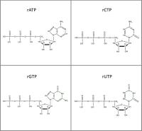 Set of 4 15N-labelled rNTPs  lithium salt solution