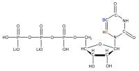 2H5 13C6 Uridine 5'- triphosphate  lithium salt solution
