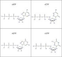 Set of 4 2H 15N-labelled  rNTPs lithium salt solution