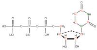 13C 15N Uridine 5'- triphosphate lithium salt  solution