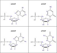 Set of 4 2H-labelled dNMPs  lithium salt powder