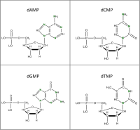 Set of 4 15N-labelled dNMPs  lithium salt powder