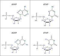 Set of 4 2H 15N-labelled  dNMPs lithium salt powder