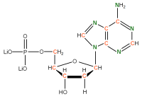 13C 15N Deoxyadenosine  5'-monophosphate