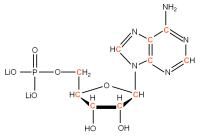13C Adenosine 5'- monophosphate lithium salt  solution