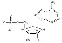 15N Adenosine 5'- monophosphate lithium salt  solution
