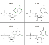 Set of 4 15N-labelled rNMPs  lithium salt solution