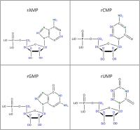 Set of 4 2H 15N-labelled  rNMPs lithium salt solution