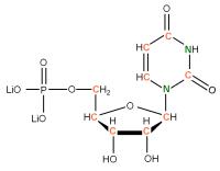 13C 15N Uridine 5'- monophosphate lithium salt  solution