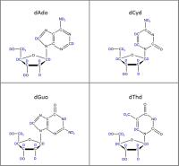 Set of 4 U-2H-labelled dNs  solution or  powder