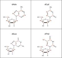 Set of 4 U-13C-labelled dNs  solution or  powder