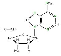 U-15N Deoxyriboadenosine  powder