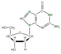 U-15N Deoxyriboguanosine  powder