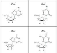 Set of 4 U-15N-labelled dNs  solution or  powder