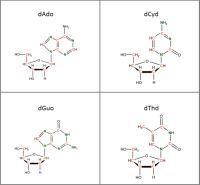 Set of 4 U-13C U-15N- labelled  dNs solution or  powder