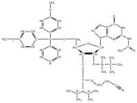 13C8 13C1' Guanosine  Phosphoramidite powder
