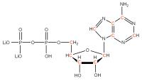 13C Adenosine 5'- diphosphate lithium salt  solution