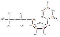 13C Uridine 5'-diphosphate  lithium salt solution